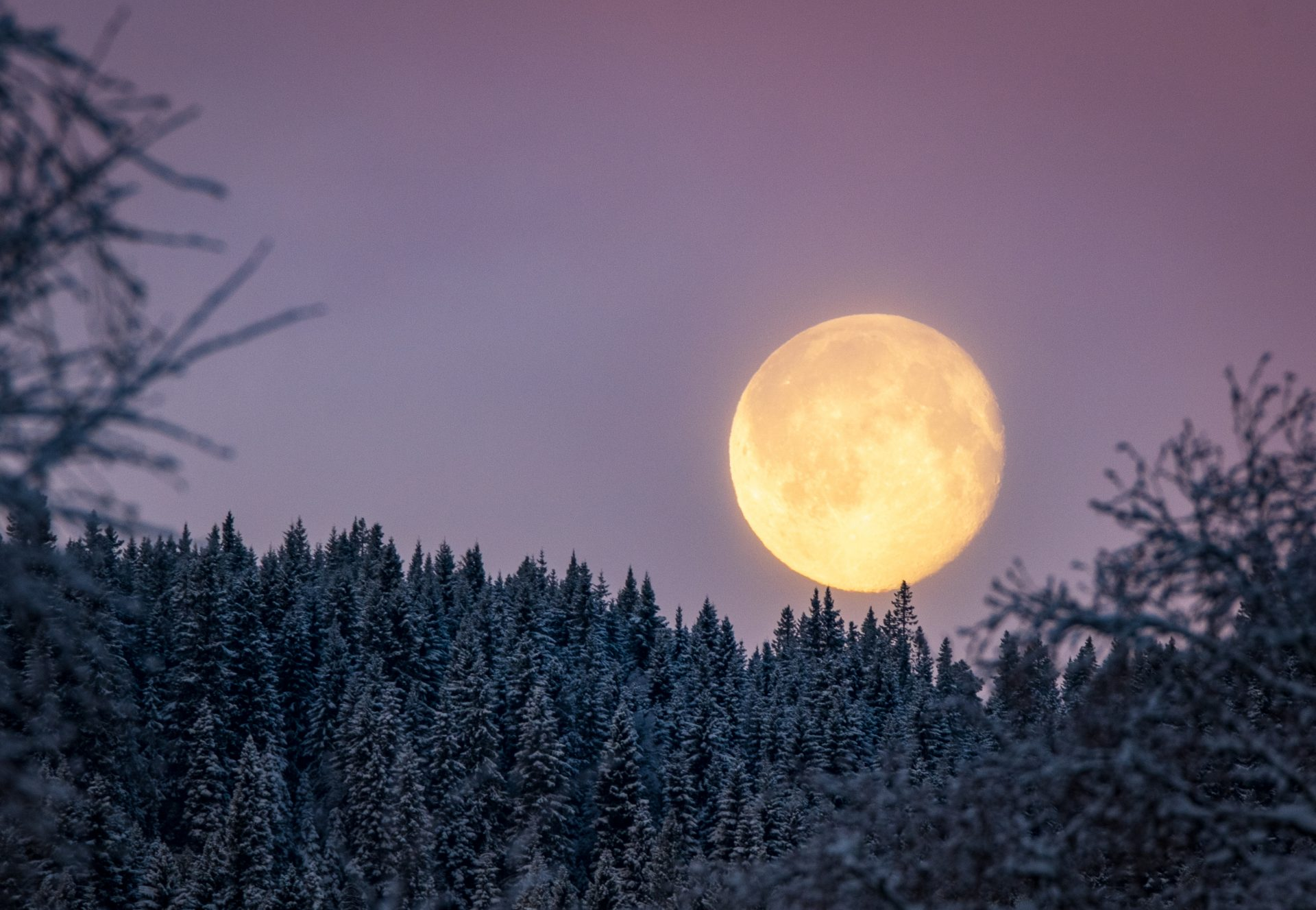 Moon setting over the tree tops
